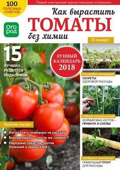 Огурцы - секреты хорошего урожая - Журнал Огород.ru - Форум для дачников | Огород.ru