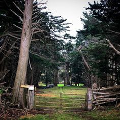 Comedy Stories, Farm Gate, Spooky Trees, Old Trees, Get To Know Me, Short Stories, Prompts, Landscape Photography, Paths