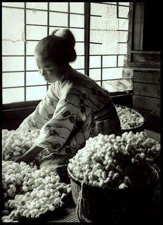 Mayu (silk cocoons) circa 1915-23 Japan