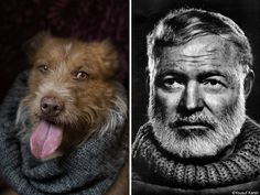Shelter Dogs Strike A Pose Like Their Famous Author Doppelgängers