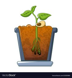 Bean plant growing icon cartoon style vector image on VectorStock Bean Bag Office, Succulent Frame, Interior Wall Colors, Bean Plant, Low Light Plants, School Decorations, Plant Illustration, Spring Activities, Cartoon Styles