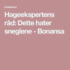 Hageekspertens råd: Dette hater sneglene - Bonansa