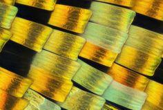 Resuelve El Enigma de la Semana ¿A qué objeto pertenece esta textura o a qué te gustaría que perteneciera?