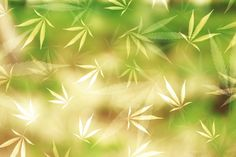 Leh na břiše, ruce složené pod čelem, Natural Medicine, Cholesterol, Dna, Life Is Good, Detox, Herbs, Health, Plants, Syrup