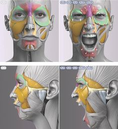 Exceptional Drawing The Human Figure Ideas. Staggering Drawing The Human Figure Ideas. Anatomy Head, Facial Anatomy, Anatomy Poses, Body Anatomy, Anatomy Art, Face Muscles Anatomy, Zbrush Anatomy, Muscle Anatomy, Facial Muscles