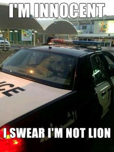 Lion goes to jail�