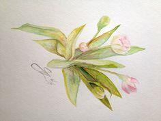 Tulips watercolor by Jacqueline Zuckerman