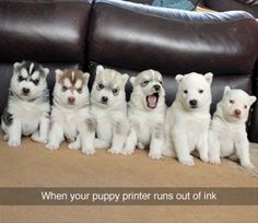 When your puppy printer runs out of ink 😂😂😂