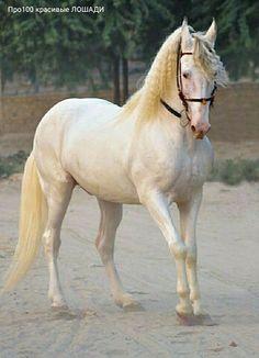 Big Horses, White Horses, Pretty Horses, Horse Love, Beautiful Horses, Animals Beautiful, Horse Pictures, Animal Pictures, Cute Pictures