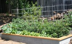 Cinder block raised bed topped with cedar - maybe stencil the sides white