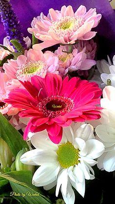 Very Beautiful Flowers, Beautiful Flowers Pictures, Beautiful Flowers Wallpapers, Exotic Flowers, Large Flowers, Amazing Flowers, Wallpaper Nature Flowers, Flower Phone Wallpaper, Flower Images