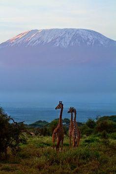#Kilimanjaro #Travel #Adventure #Mountain #Tanzania