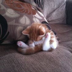 18 Kittens Who Couldn't Keep Their Eyes Open - We Love Cats and Kittens