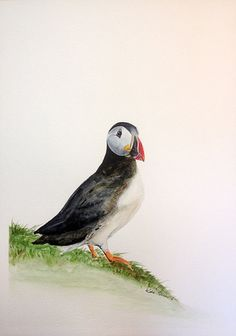 Puffin bird watercolor painting size 12x16 original by KatePlumArt