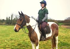 15 coloured Mare All Rounder Horse for sale in Laois, Ireland!