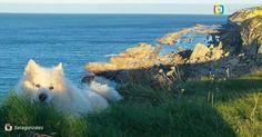 Tiempo de relax en la Playa de Langre. Imagen enviada por @llatagonzalez  Gracias por compartir  #langre #ribamontanalmar #cantabriasan #cantabria #turismo #cantabriayturismo #cantabria_y_turismo #cantabriainfinita #cantabros #perro #cantabriaverde #cantabriarural #igerscantabria #paseucos #paseúcos #cantabriamola #igercantabria #igcantabria #fotocantabria #follow #picoftheday #instapic #fotodeldia #pasionporcantabria #latierruca #lamontaña Esta imagen tiene copyright