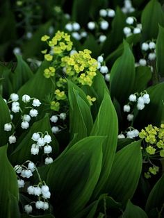 GREEN AND WHITE;  Lily of the Valley and Euphorbia
