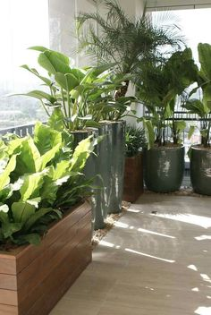 balcony privacy More The post .balcony privacy appeared first on Garden Diy. Rooftop Patio, Outdoor Balcony, Outdoor Gardens, Balcony Ideas, Patio Ideas, Roof Gardens, Balcony Flowers, Balcony Plants, Balcony Gardening