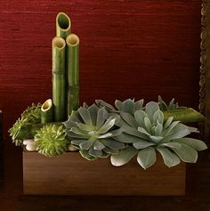 Masculine arraignment of Bamboo and succulents.