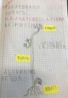 Esseri viventi e non viventi, classe prima – Maestra Mihaela Botany, Bullet Journal, 3, Album, Alphabet, Tecnologia