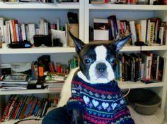 everyday i´m hustlin'! Unser Kundensupport ist 24/7 für Dich im Einsatz. Dog Whisperer, Photo Journal, Cool Sweaters, Boston Terrier, This Is Us, Dogs, Bro, Animals, Selfies