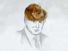 He'd probably do better if he had a cat on his head.