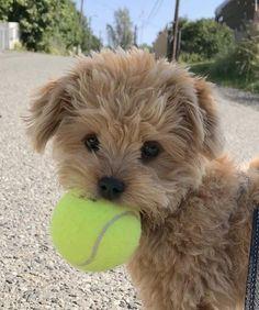 Baby Animals Super Cute, Super Cute Puppies, Cute Little Puppies, So Cute Baby, Cute Little Animals, Cute Dogs And Puppies, Cute Funny Animals, Baby Dogs, Cute Babies