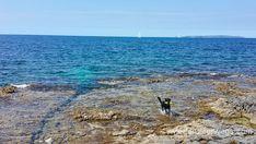 Camp Cikat Mali Losinj_Mai 2016_WEB (12 von 23) Mai, Water, Outdoor, Campsite, Croatia, Travel Report, Destinations, Pet Dogs, Viajes