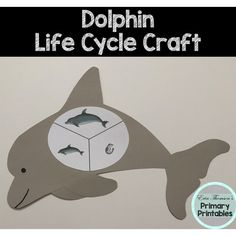 Craft includes: life cycle charts (with and without pictures) body flukes flippers Elementary Science, Teaching Science, Science Activities, Elementary Schools, Cycle Pictures, Life Cycle Craft, Cut And Paste, Life Cycles, Dolphins