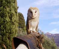 WILLA!!!!   CASTLE OF VEZIO   Varenna, Lake Como -owls, falcons, views, hinking....
