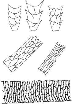 Haarstrukturen_im_Vergleich