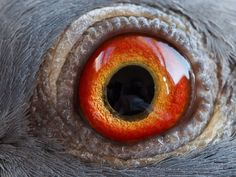 Pigeon being 'operated on' Pigeon Eyes, Pigeon Bird, Dove Pigeon, Pigeon Loft, Racing Pigeons, Photos Of Eyes, Close Up Pictures, Go Outside, Natural World