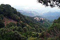 El bosque y/o matorral mediterráneo (o durisilva) es un bioma de bosques y matorrales que se desarrolla en regiones con clima mediterráneo, ...