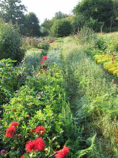 La Collardiere, Basse Normandie. WWOOFers can help out in the organic garden [specialising in herbs, salads and edible flowers] in the lovely Normandy countryside http://www.organicholidays.co.uk/at/756.htm
