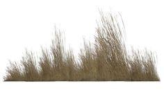 Dry Vegetation 04 by wolverine041269 on DeviantArt