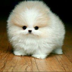 little pig friend who's already stolen my heart in Disney's MOANA Cute Teacup Puppies, Super Cute Puppies, Cute Baby Dogs, Cute Dogs And Puppies, Cute Baby Animals, Animals And Pets, Most Beautiful Dogs, Animals Beautiful, Kittens Cutest
