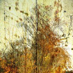 'Birken-Gruppe - birch group' von Chris Berger bei artflakes.com als Poster oder Kunstdruck $20.79