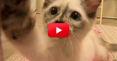 Does It Get Any Cuter Than Kittens Playing With Crepe Paper? Um, No. | The Animal Rescue Site Blog