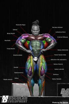 Kai Green anatomy. very cool