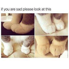 bj @cutencats