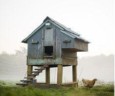 Chicken coop love....