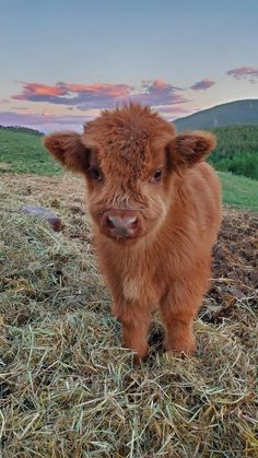 Cute Baby Cow, Baby Animals Super Cute, Baby Cows, Cute Cows, Cute Little Animals, Cute Funny Animals, Cute Babies, Baby Farm Animals, Cute Baby Pigs