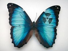 Amazing Art on Butterflies Wings