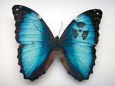 Amazing Art on Butterflies Wings