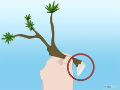 Propagate Azaleas 2  9 Dip the bottom inch (2.54 cm) of the branch in liquid or powdered fertilizer. 10 Remove the excess fertilizer by blotting the branch with a rag, or shaking it, depending on the type of fertilizer.