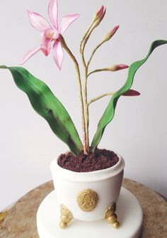 Minicake-mini orchid
