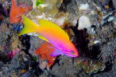 This reef fish glows in the dark. I wonder when it will be time for a board split here.