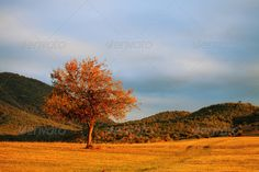 single red tree ...  autumn, background, beautiful, beauty, blue, clouds, fall, field, forest, grass, green, landscape, leaf, meadow, nature, oak, october, orange, panorama, red, rural, scenic, season, single, sky, sunrise, sunset, tree, view, vintage