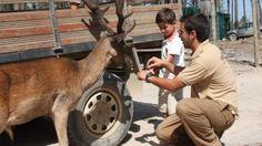 Lisbon Family Things To Do   Must-Sees   Four Seasons Hotel Ritz Badoca Safari Park
