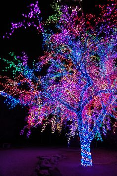 Christmas Lights. How can you get light on every part of a tree? That's awesome.